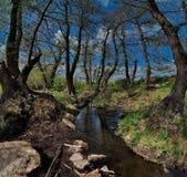 Skacze na rzekach park narodowy Bayanaul Obraz Stock