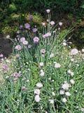 Skacze przy Zagreb ` s ogródem botanicznym, flora, 19 Zdjęcia Stock