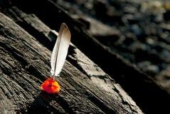 Skacze w drewnianych promieniach na schronieniu Zdjęcia Stock