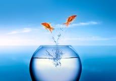 skacze z wody złotą rybkę Zdjęcie Stock