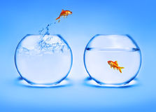 skacze z wody złotą rybkę Obrazy Stock