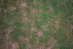 skada av grönt gräs royaltyfri bild