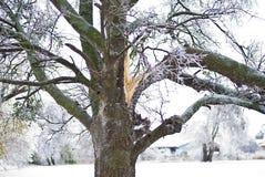 Skada för isstorm Royaltyfri Fotografi