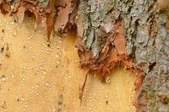 Skada för röda hjortar i skogen arkivfoto