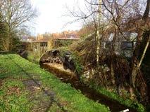 skada fallna skogstormtrees Royaltyfri Fotografi