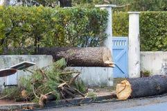 skada fallna skogstormtrees Brutet träd i stad Royaltyfria Foton