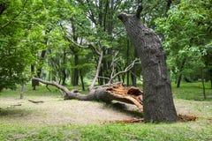skada fallna skogstormtrees r fotografering för bildbyråer