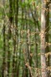 Skada, l?vf?llning och skogsavverkning som orsakas av stora antal av larver f?r vintermalOperophtera brumata royaltyfri bild