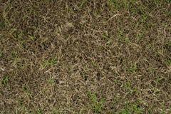 Skada till gröna gräsmattor royaltyfria foton