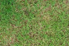 Skada till gröna gräsmattor arkivbild