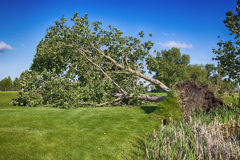 Skadad golfbana för storm Arkivbilder