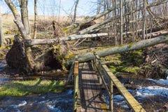 Skadad skog för storm fotografering för bildbyråer