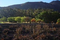 Skadad vingård för brand som omges av gröna berg Royaltyfri Bild