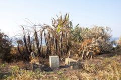 Skadade picknickbänkar och bränd tropisk vegetation efter Destr Royaltyfri Bild