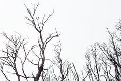 Skadade träd för Bushfire Arkivbild