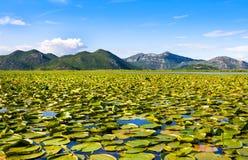 Skadar湖国家公园,黑山 图库摄影