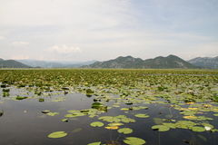 skadar的湖 免版税图库摄影