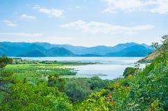 The Skadar Lake among the greenery Royalty Free Stock Photo