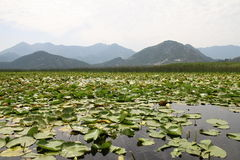 Skadar lake, Montenegro. Skadar lake national park in Montenegro Stock Photo