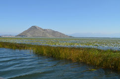 Skadar lake in the morning Stock Image