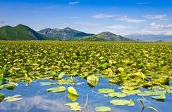 Skadar Lake National Park, Montenegro Stock Image