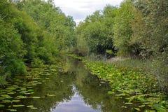 Skadar Lake - Skadarsko jezero Stock Photography