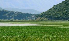 Skadarsko Jezero沼泽风景 免版税库存照片