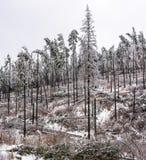 Skadat skoglandskap för storm Arkivbilder