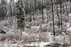 Skadat skoglandskap för storm Royaltyfri Foto