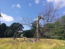 Skadat träd för storm arkivfoton