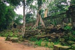 Skadeväggstenar i tät djungel angkor cambodia Royaltyfri Bild