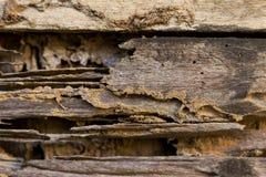 Skadlig wood vägg Arkivbilder