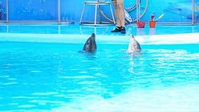 Skadovsk, 09 Oekraïne-September 2016 Toespraakdolfijnen in Dolphinarium stock videobeelden