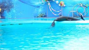Skadovsk, Ukraine-September 09.2016. Speech dolphins in the Dolphinarium stock video