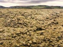 Skaftareldahraun lava fields in Iceland. Skaftareldahraun lava fields covered with moss in Iceland royalty free stock photos