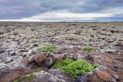 Skaftareldahraun lava fields in Iceland. Skaftareldahraun lava fields covered with moss in Iceland stock photography