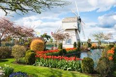 Skagit dal Tulip Town Festival Windmill Garden arkivbild