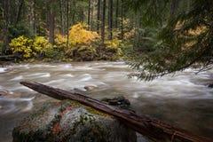 Skagit flod Fotografering för Bildbyråer