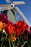 Skagit Tulip Festival, Washington State Stock Photos