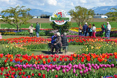 2013 Skagit Valley Tulip Festival Royalty Free Stock Image