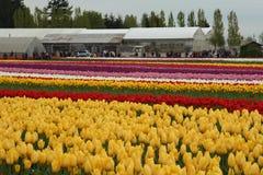 Skagitvallei Tulip Festival, Washington, Seattle stock fotografie