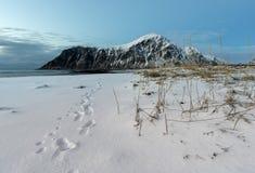 Skagsanden Beach n the winter on the Lofoten Islands Royalty Free Stock Photo