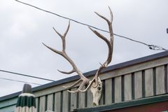 Skagway alaska in june, usa northern town near canada stock image