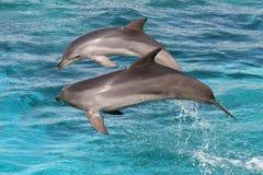 skakać delfinów Zdjęcie Stock