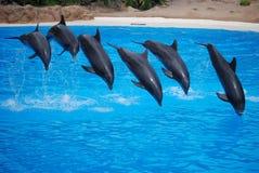 skakać delfinów Zdjęcie Royalty Free