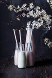 Skakor och blomningplommonträd på mörkt trä Fotografering för Bildbyråer