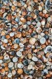 Skal av många typer och format på stranden royaltyfria foton