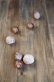Skal av sniglar på träbakgrunden Fotografering för Bildbyråer