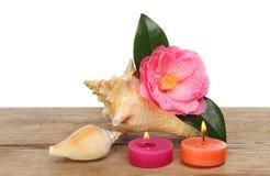 Skal blomma och stearinljus Royaltyfria Bilder