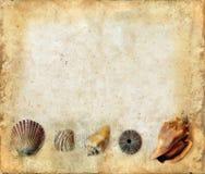 skal för hav för bakgrundsunderkantgrunge Royaltyfri Foto